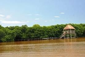 Ecosistema de manglar en Yucatán