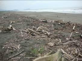 Residuos de vegetación en la costa