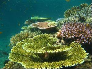 formación coralina
