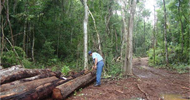 Profepa - La ley al servicio de la naturaleza - Asegura la Profepa ...