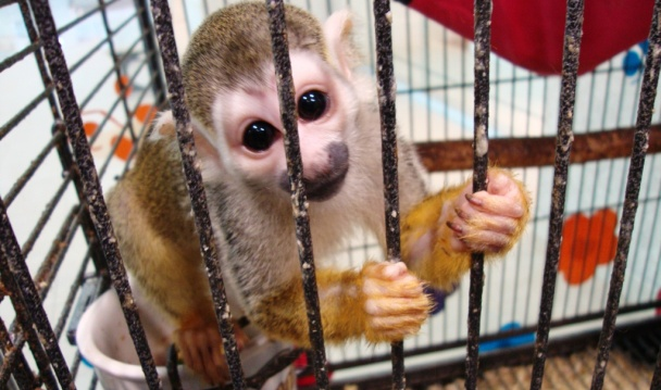 la Profepa aseguró en Monterrey 36 animales, algunos en peligro de