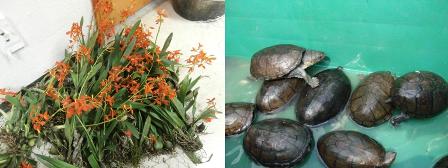 Collage de ejemplares de vida silvestre