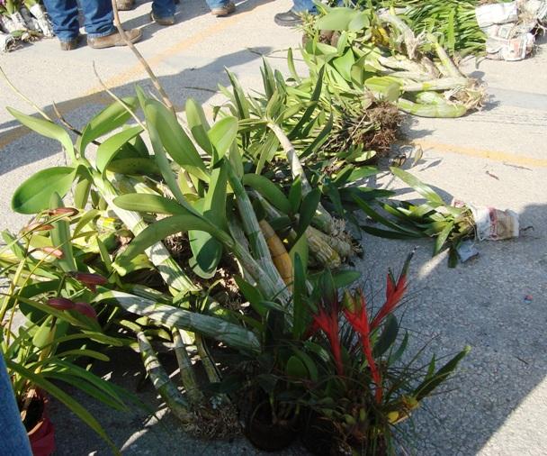 Se lograron asegurar más de 200 ejemplares de orquídeas