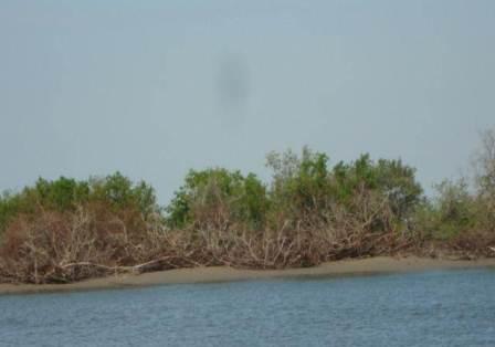 verificación de ecosistemas de manglar