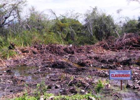Clausura a obras y actividades en zonas de manglar